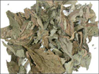 Salvia dried leaves